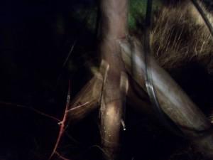 Aufgrund des Windes leider etwas unscharf: Das schnell gezimmerte Dreibein